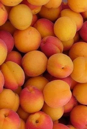 aprikozes